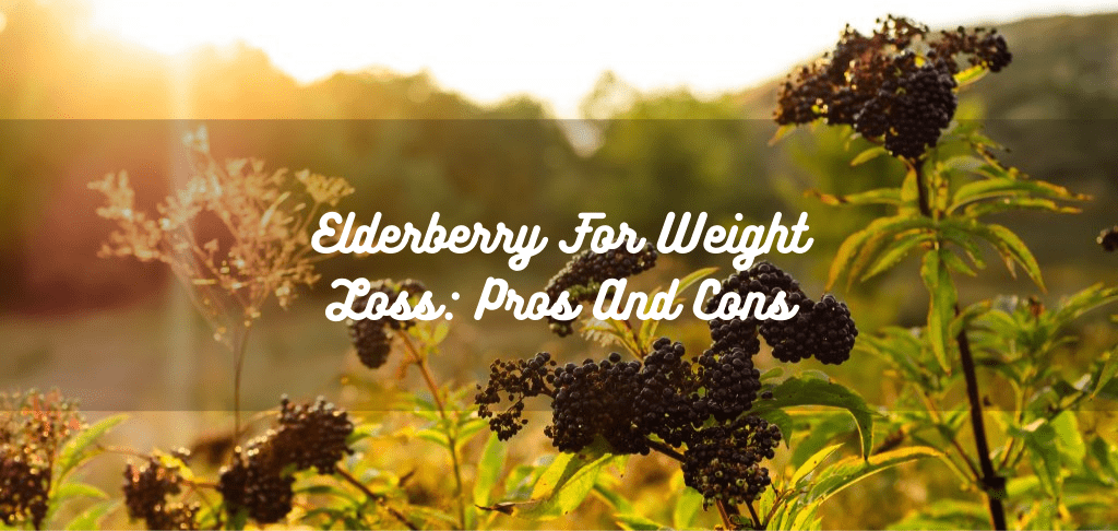 Elderberry For Weight Loss: Pros And Cons